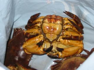 Krabben eten