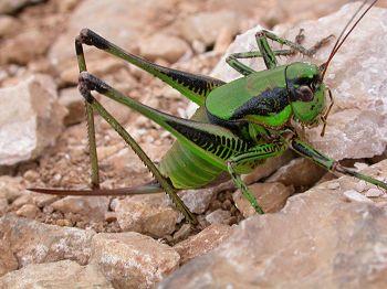 vliegende insecten kroatie